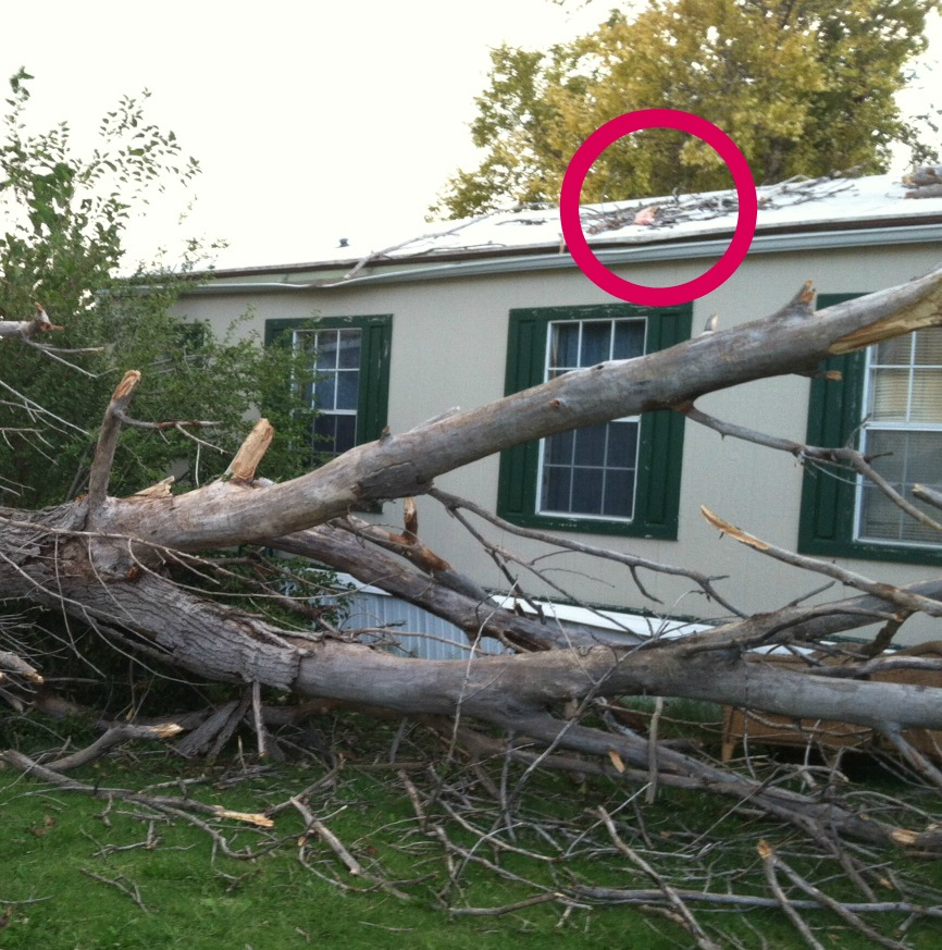 tree - roof